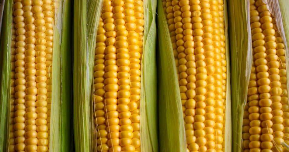 jak długo gotować kukurydzę